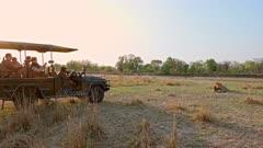 tourists watching lion from safari vehicle, male lion (Panthera leo), South Luangwa National Park, Mfuwe, Zambia, Africa
