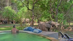 Tourists watching from swimming pool African elephants (Loxodonta africana) eating on meadow of Nkwali Lodge, South Luangwa National Park, Mfuwe, Zambia, Africa