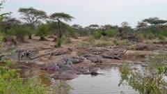 Hippos or Hippopotamus (Hippopotamus amphibius) at Hippo Pool in Serengeti National Park, UNESCO world heritage site, Tanzania, Africa