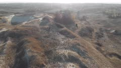 Wild boars (european) running on Grey Dunes