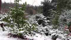 Small snowy trees