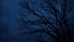 Spooky Barren Oak Tree at Twilight