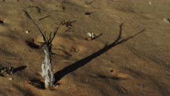 Mesquite branch Shadow Crawls across the Desert Sands