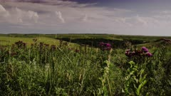 An Idyllic, Grant Wood like imagined, Tall Grass Prairie under Summer Skies