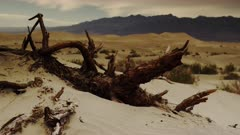 Fallen Mesquite tree and log being reclaimed by the desert sands and dunes of Death Valley