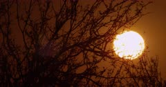 Setting sun through the branches of a mature mesquite tree.  Telephoto.