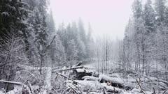 Washington State - Cascade Mountain Range - Forest Snow