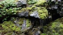 Washington State - Olympic Peninsula - Waterfall with Mossy Rocks