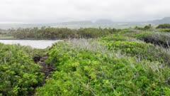 Hawaii Island -  Rocky Coast with Ancient King's Trail