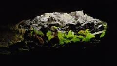 Hawaii Island - Native Rain Forest - Lava Tube Cave