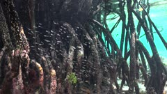 mangroves underwater