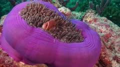 Underwater Wonders, a beautiful relaxing movie