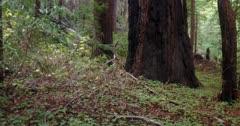 AERIAL, Central Coast California, Big Sur, REDWOODS