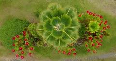 Aerial Hawaii, Palm Trees