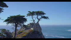 Lone Cypress Tree, Central California Landmark