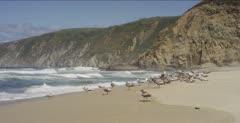 Seagulls resting along shoreline beneath sea cliffs, 48fps