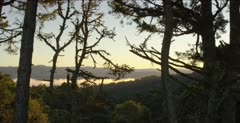 Pine forest at Point Reyes National Seashore, fog in valley, dawn