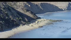 Northern elephant seal colony, Point Reyes National Seashore