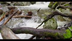 Creek, fast flowing water, tilt upwards, rack focus