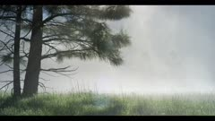 Foggy meadow, early morning, conifer tree