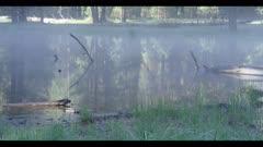 Seasonal pond with feeding mallard duck, morning fog