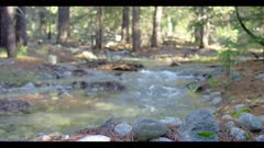 Tributary creek flows with heavy water in forest