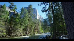 Merced River flowing heavy in conifer forest, white El Capitan