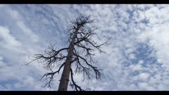 Time-lapse storm clouds moving in, old tree, winter