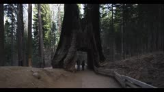 Hikers on trail stand inside giant sequoia tree tunnel