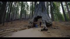 Two hikers walk through sequoia tree tunnel, Yosemite