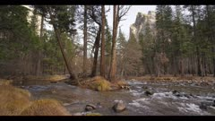 River water surrounds group of trees during winter, scenic Yosemite