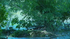 Great White Egret Camouflaged In Shade Near Flowing River