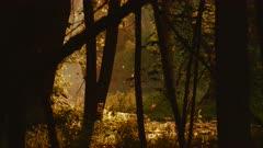 Trees Along Lakeshore