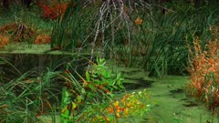 Wetland Pond With Fall Foliage