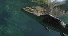 following alligator on the surface