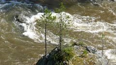 big rock with young tree in mountain river, 4k