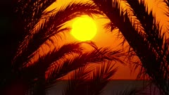 beautiful landscape with palms and sunrise over sea, 4k