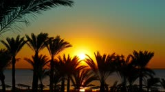 beautiful beach landscape with palms and sunrise over sea, 4k