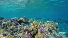 Beautiful underwater landscape with fish swim among corals in the Red Sea - Egypt