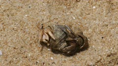 pair of hermit crabs in the sand close-up 4k