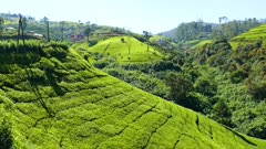 panorama of mountain tea plantation in Sri Lanka 4k