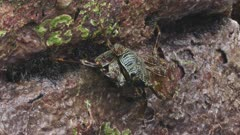 crab eating on stone seashore