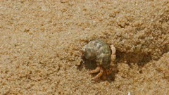 hermit crab in the sand close-up