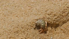 hermit crab in the sand close-up 4k