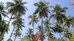 coconut palms under blue sky