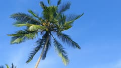 branches of coconut palm against blue sky 4k