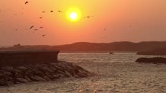 Sunset sky background with flying seagulls in Essaouira, Morocco, 4k