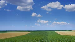 Rural landscape with fields stripes of sunflowers and wheat in Serbia, panorama timelapse 4k