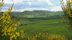 Tuscany hills landscape with yellow flowers on foreground, Italy, 4k