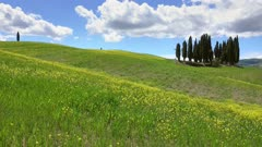 Tuscany hills landscape with yellow flowers on green fields, Italy, 4k